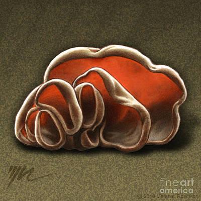 Mushroom Drawing - Wood Ear Mushrooms by Marshall Robinson