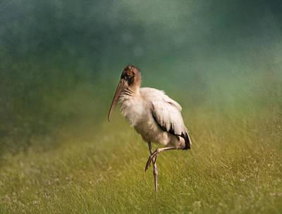 Wood Stork - Balancing Print by Kim Hojnacki