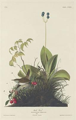 Wren Drawing - Wood Wren by John James Audubon