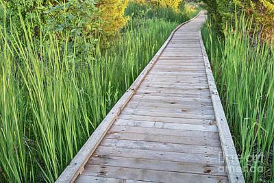 Wooden Boardwalk  Across Swamp Print by Marek Uliasz