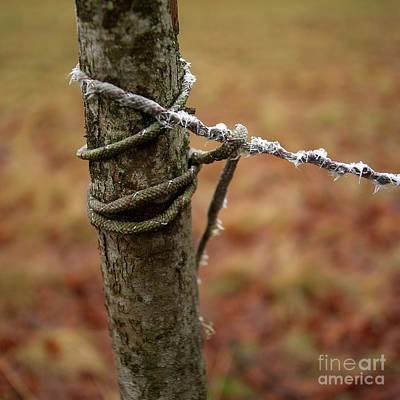 Single Object Photograph - Wooden Posts by Bernard Jaubert