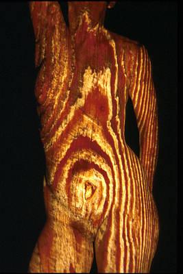 Woodgrain Original by Arla Patch
