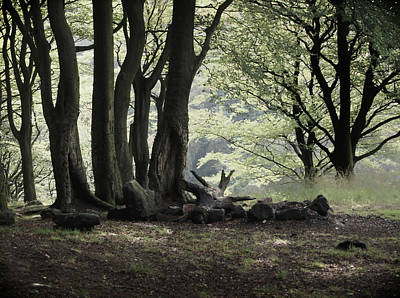 The Woodland Clearing  Print by Philip Openshaw