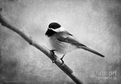 Chickadee Digital Art - Woodland Flirt  by Beve Brown-Clark Photography