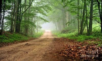 Travel Photograph - Woodland Journey by Terri Gostola