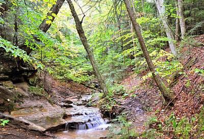 Woodland Stream Print by Terri Gostola