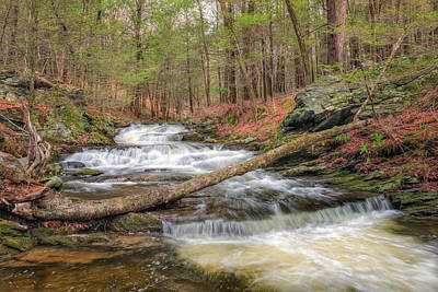 Woodland Waters Print by Bill Wakeley