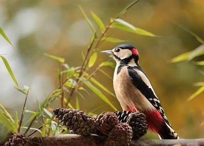 Woodpecker Photograph - Woodpecker 3 by Heike Hultsch