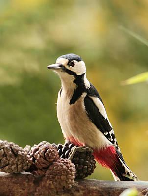 Woodpecker Photograph - Woodpecker In Winter by Heike Hultsch