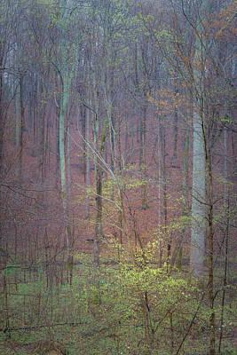 Dogwood Photograph - Woods In Rain by Joseph Smith