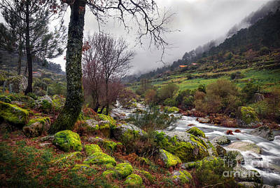 Creek Photograph - Woods Landscape by Carlos Caetano