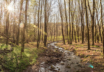 Buttermilk Photograph - Woods Wondering by Kristopher Schoenleber