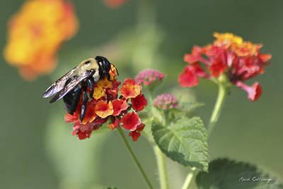 Workaholics Photograph - Workaholic Bee by Reid Callaway