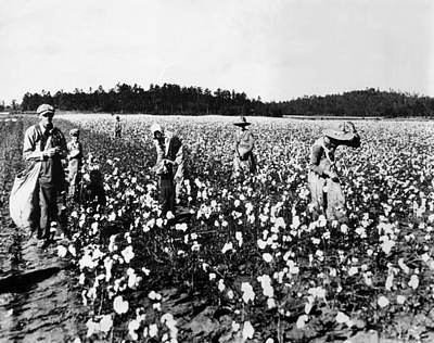 Workers Picking Cotton, Georgia, 1936 Print by Everett