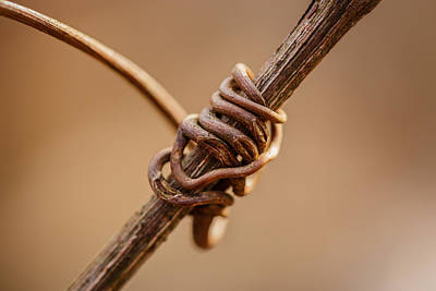 Vines Photograph - Wrapped Around You by Shane Holsclaw