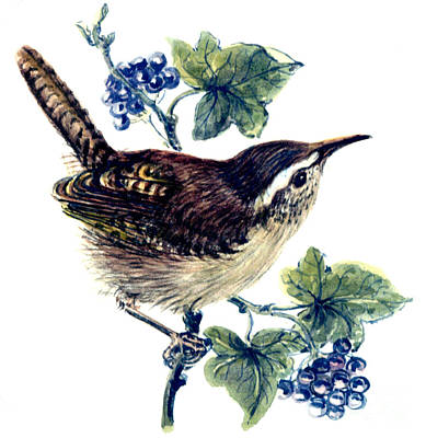 Wren In The Ivy Print by Nell Hill