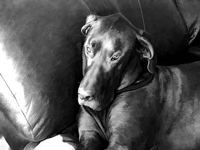Great Dane Digital Art - Wyatt In The Recliner by Theresa Campbell