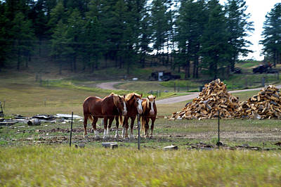 Pasture Scenes Mixed Media - Wyoming 3 Horses On The Ranch by Thomas Woolworth