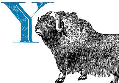 Yak Digital Art - Y Yak by Thomas Paul