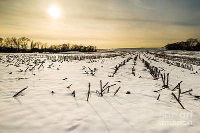 Forest Photograph - Yankee Farmlands No 50 - Snowy Farm And Corn Field by JG Coleman