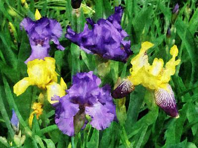 Iris Photograph - Yellow And Purple Irises by Susan Savad