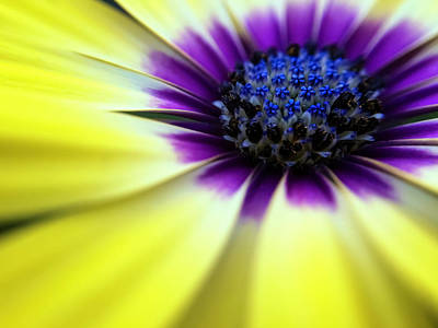 Blooming Digital Art - Yellow Beauty With A Hint Of Blue And Purple by Eduard Moldoveanu