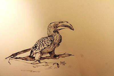 Hornbill Drawing - Yellow Billed Hornbill by Yuanitha Du Plessis