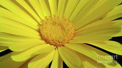 Arizona Photograph - Yellow Bloom by Chandra Nyleen