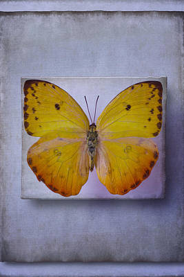 Butterfly Photograph - Yellow Butterfly Dreams by Garry Gay
