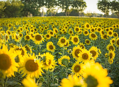Europe Provence Aix-en-provence Photograph - Yellow Carpet by Rachel Helfand