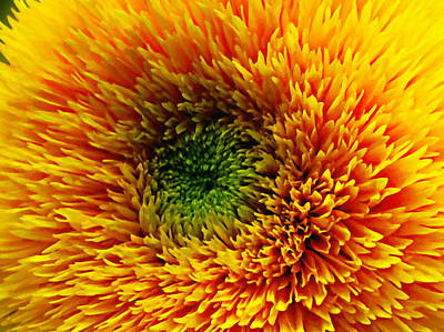 Mums Painting - Yellow Chrysanthemum 3 by Lanjee Chee