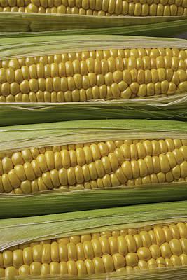 Yellow Corn Print by Garry Gay
