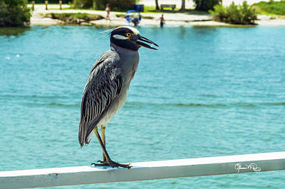 Animals And Earth Photograph - Yellow Crowned Night Heron 1 Of 2 by Susan Molnar