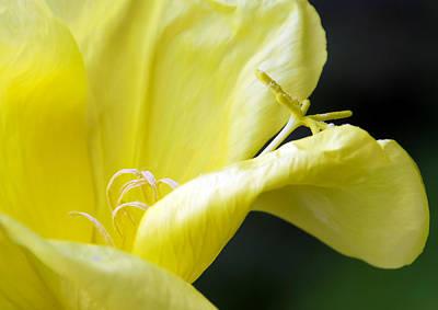 Yellow Flower Print by Svetlana Sewell