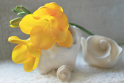 Yellow Freesia With Shells Original by Terence Davis