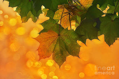 Yellow/green Print by SK Pfphotography