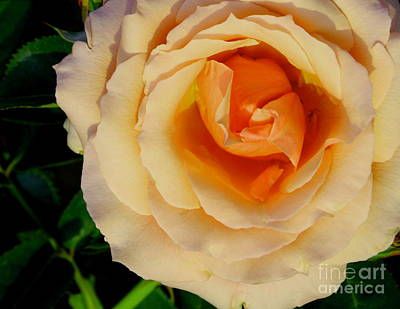 Roses Photograph - Yellow Heart Of The Rose by Gary Deal