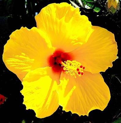 Yellow Hibiscus Flower Print by Maggie Vlazny