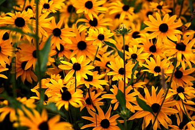 Flowers Photograph - Yellow In Bulk by Emily Stauring