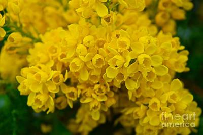 Yellow Is The Joy Of Spring Print by Debra Banks