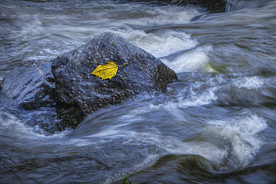 Yellow Leaf Caught On A Rock Print by Randall Nyhof