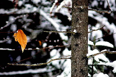 Winter Scenes Photograph - Yellow Leaf by Emily Stauring