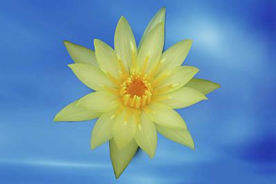 Garden Digital Art - Yellow Lotus by Ridwan Photography