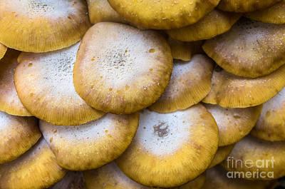 Yellow Mushrooms Print by Carlos Caetano