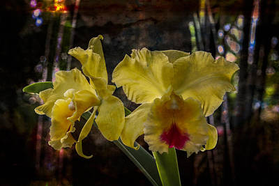 Yellow Orchids Print by Debra and Dave Vanderlaan