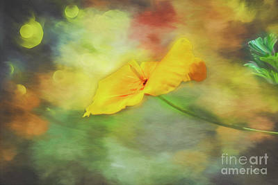 Yellow Poppy Print by Jutta Maria Pusl