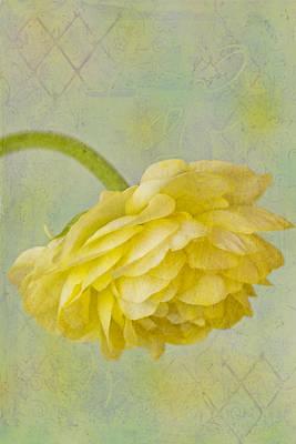 Ranunculus Photograph - Yellow Ranunculus Macro by Sandra Foster