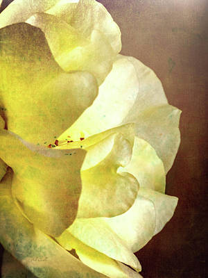 Yellow Rose Print by Bob Orsillo