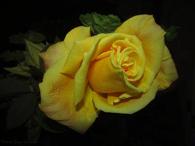 Photograph - Yellow Rose Of Love by Joyce Dickens