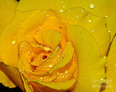 Yellow Rose With Droplets By Kaye Menner Print by Kaye Menner